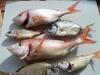 poissons_030