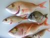 poissons_032